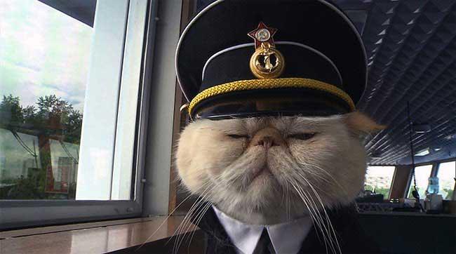 chat-persan-capitaine-bateau-navire-6