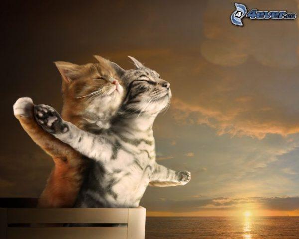 chats titanic sur apln-blog